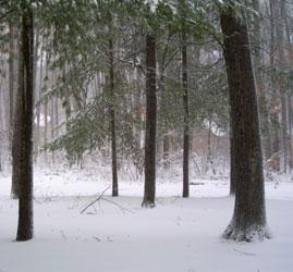 Winter wonder image