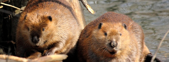 Busy Beavers and Lost Connections
