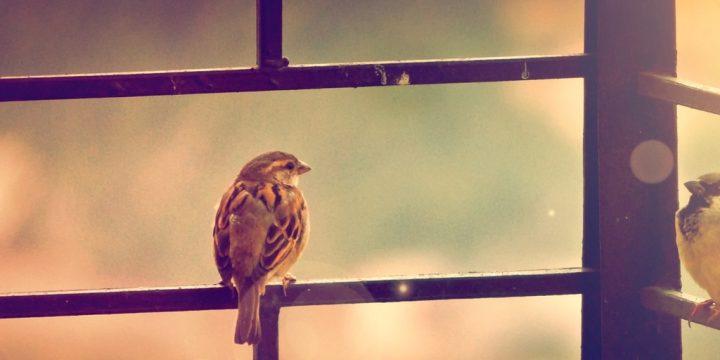 Birds Bring The Sky Inside